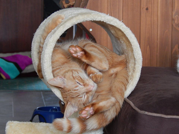 cats-sleeping-awkward-positions-5