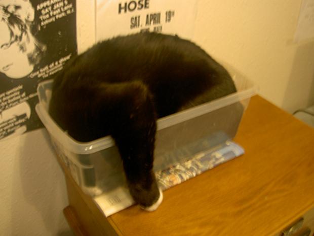 cats-sleeping-awkward-positions-51