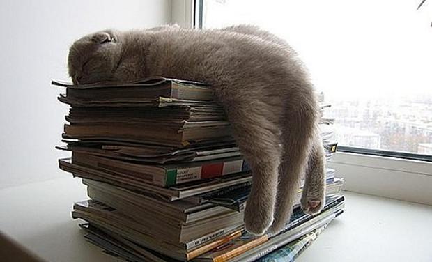 cats-sleeping-awkward-positions-52