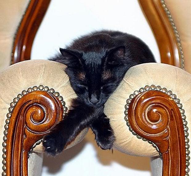 cats-sleeping-awkward-positions-53