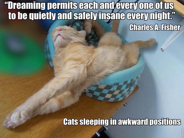 cats-sleeping-awkward-positions-6