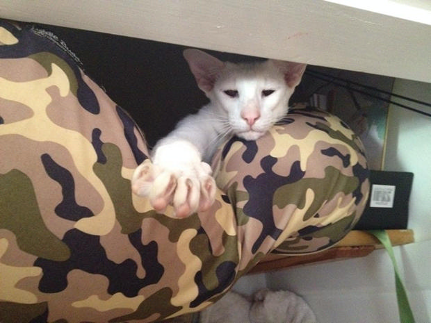 cats-sleeping-awkward-positions-7