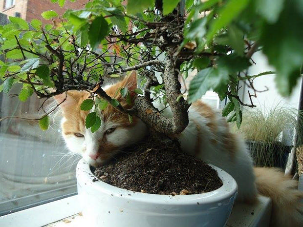 cats-sleeping-awkward-positions-8
