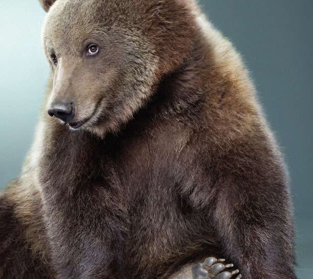 25 Photos of Ridiculously Photogenic Animals