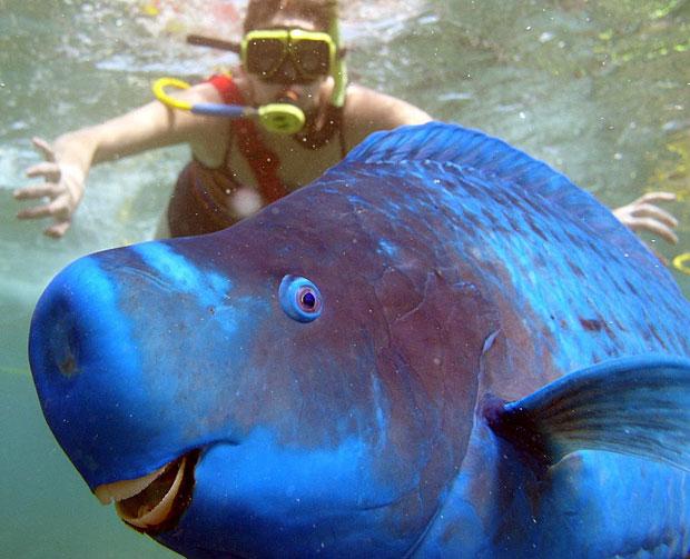 photogenic-fish