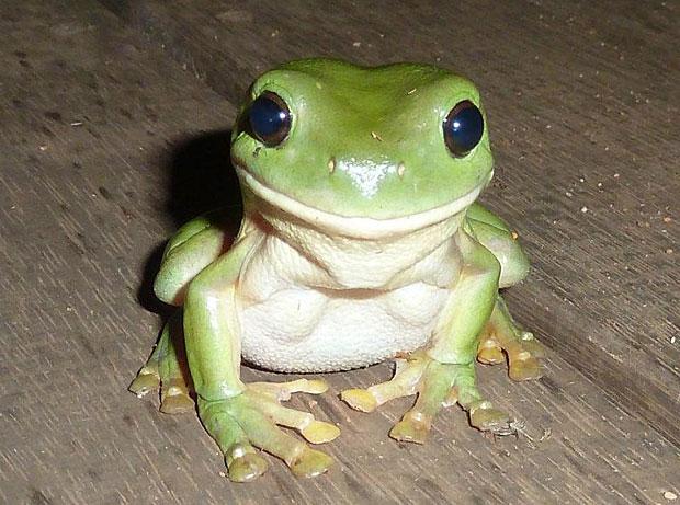 photogenic-frog