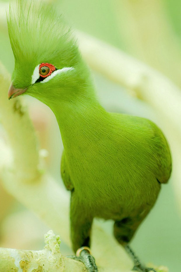 photogenic-green-bird