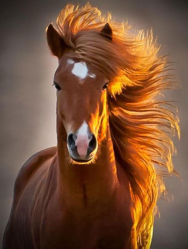 photogenic-horse