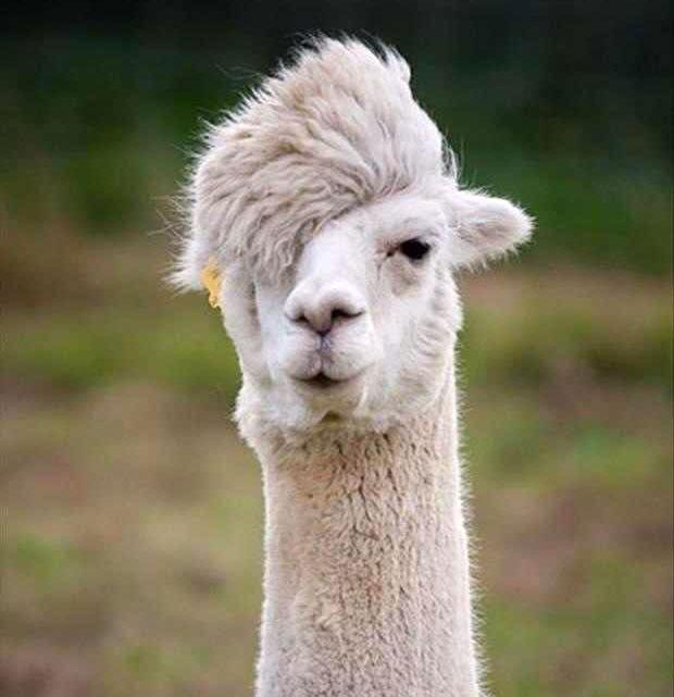 photogenic-llama