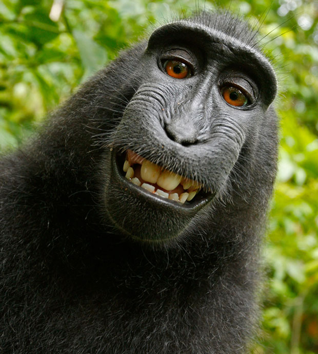 photogenic-macaques-monkey