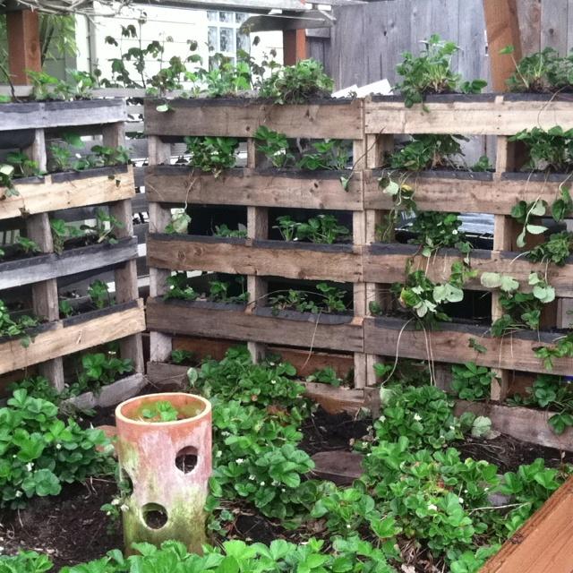 ideas pallets raised garden beds (10)