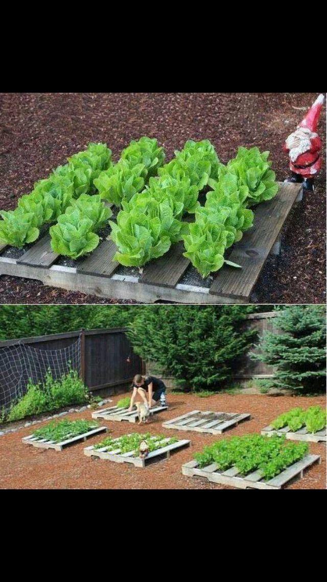 ideas pallets raised garden beds (15)