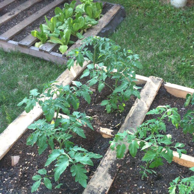 ideas pallets raised garden beds (17)
