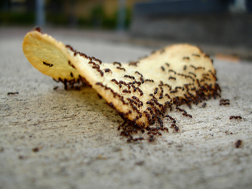 How to Get Rid of Ants in Your Home Naturally