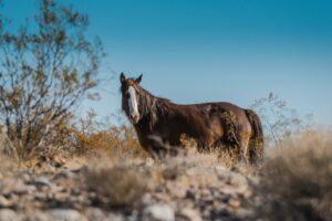 Click foWild Desert Horsesr more pics.