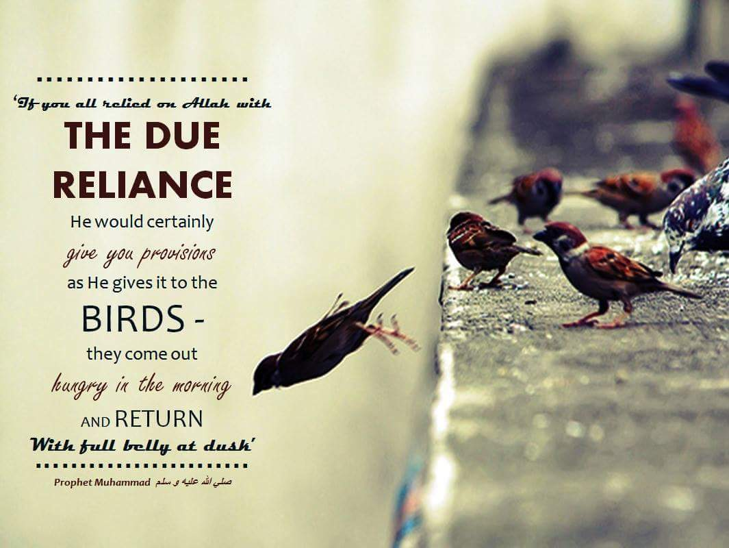 if you all relied on allah