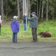 Life in Alaska with Bears