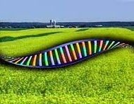 Why Genetically Engineered Food is Dangerous:  New Report