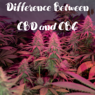 Differences Between CBD and CBG Cannabinoids