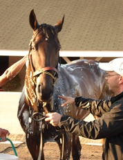 Street Sense having a bath the day after his 2010 Derby win