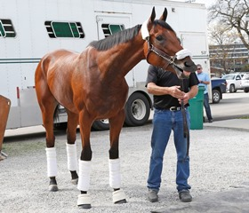 Derby favorite American Pharooah arriving Churchill Downs. Photo by Reed Palmer Churchill Downs