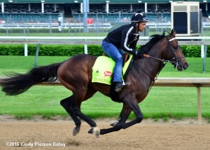 Exaggerator working at Churchill Downs, Derby week - Photo by Cindy Pierson Dulay