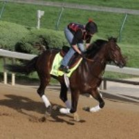 Orb in 2013 at Churchill Downs during Derby week