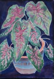 Caladium plant watercolor resized 12 09