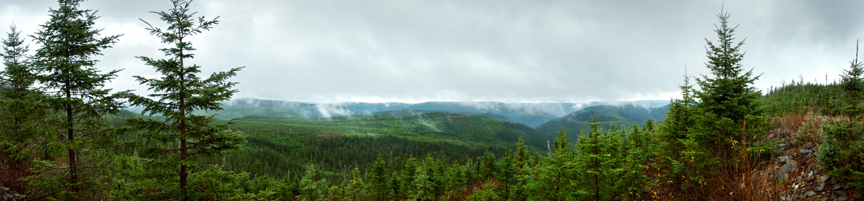 Reforestation Panorama