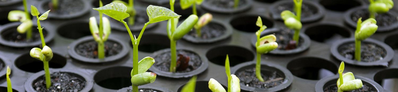 Reforestation Seedlings