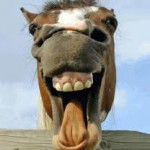 Horses do not support Mitt.