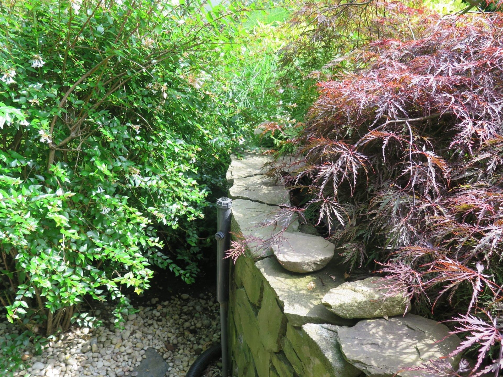 Overgrown Plants