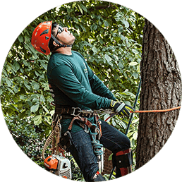 Tree Preservation Image