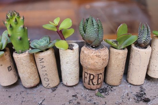 wine corks used for planting