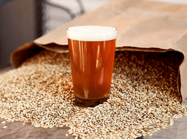 Glass Of Homebrew Sitting In Grains