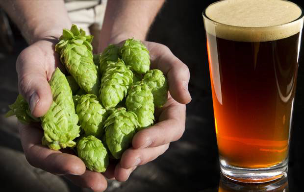 Making Single Hop Beer Recipes
