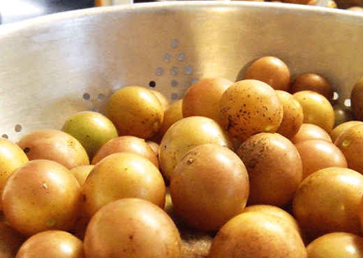 Muscadines For Making Wine