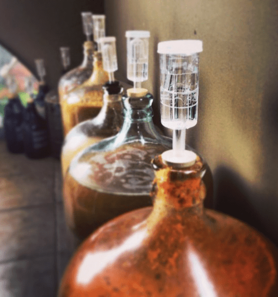 Row Of Carboys With Mead