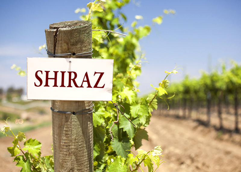 Picture showing difference between Shiraz and Syrah.