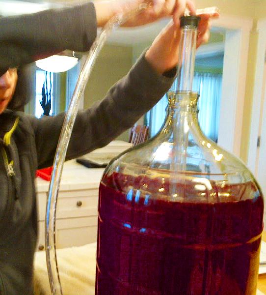 Using auto siphon on wine ingredient kit.