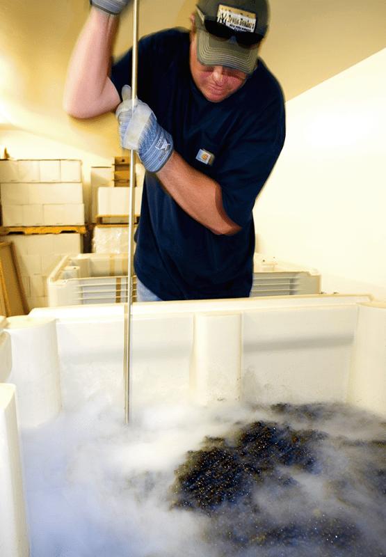 Winemaker Punching Cold Fermentation