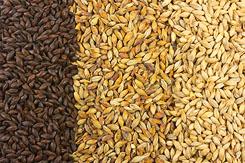 Malted Barley Grains