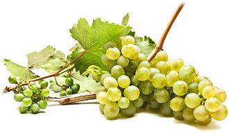 Grapes For Steam Juicer