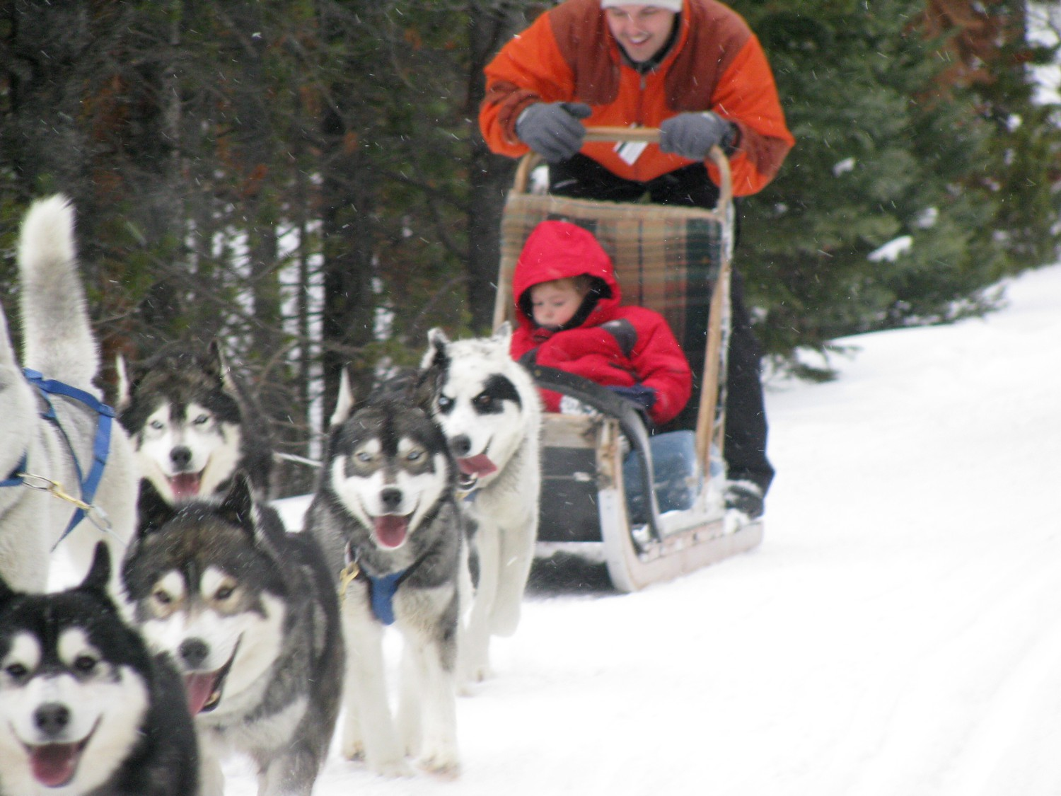 Dog sledding is one of the non-skiing activities at Breckenridge, where you can also get a free Mining Tour with a mountain ski ambassador © 2016 Eric Leiberman/goingplacesfarandnear.com