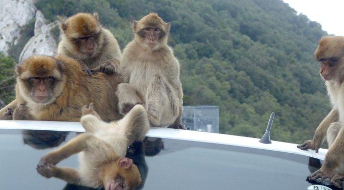 Global Scavenger Hunt: Surmounting the Rock of Gibraltar in Par 6 Leg