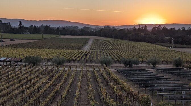 Wine & Art: The Perfect Pairing in Sonoma, California