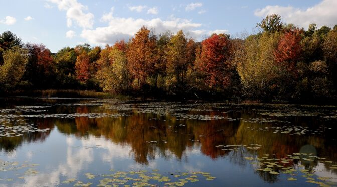 Most Glorious Fall Foliage is Right in Our Neck of the Woods