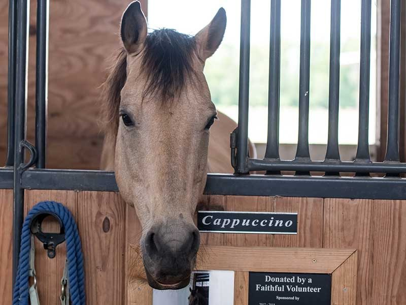 Brown horse in stall with head sticking out