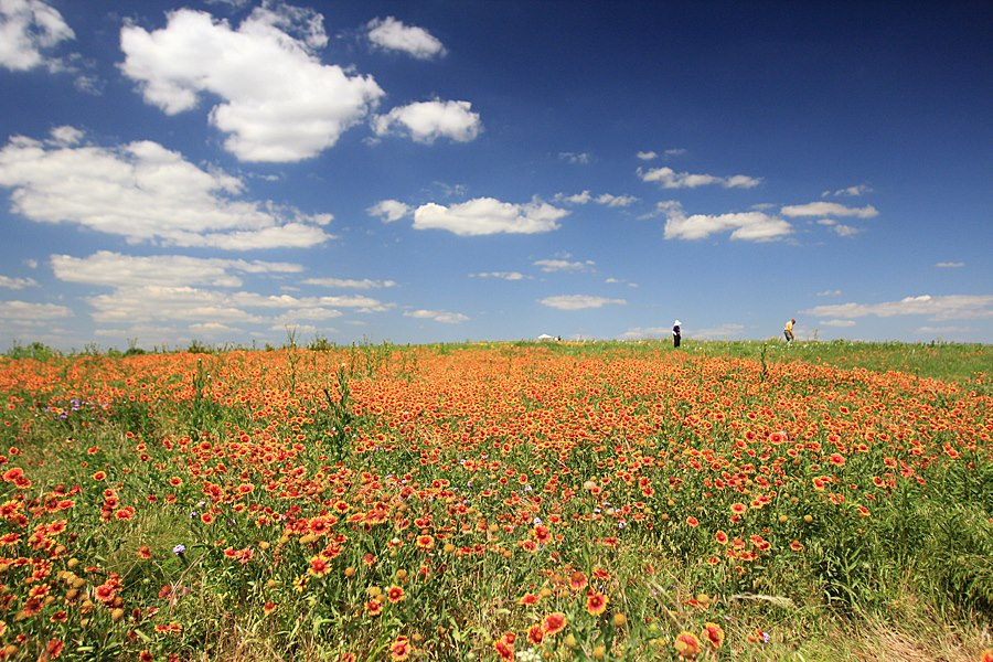 Read more about the article The View from on Top of the Mound; Ramblings about Our Prairie, its Plants and its Critters