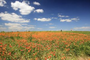 Read more about the article The Flower Mound; Sacred Ground to Many